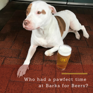 kanine barks for beers