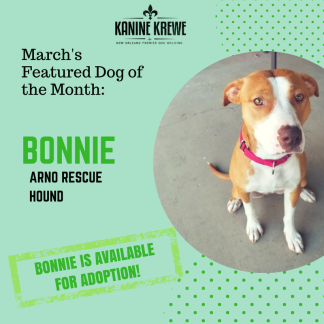 March Featured Dog